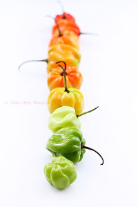 Jamaican Hot peppers